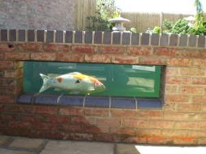Koi carp and goldfish what 39 s the difference ponds4u for Koi carp pond construction