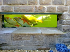 Building a koi pond where to build it ponds4u for Koi pond builders uk