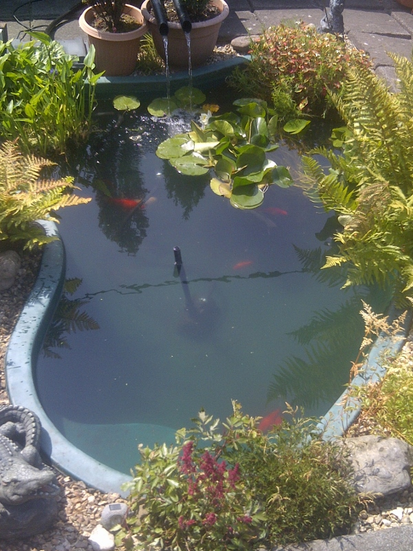 Pond safety essential advice ponds4u for Koi in paddling pool